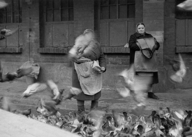 Feeding pigeons by